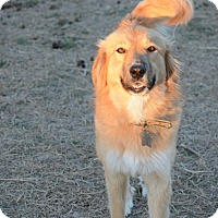 Adopt A Pet :: Trixie - Kyle, TX
