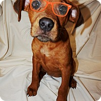 Adopt A Pet :: Pandora - Converse, TX