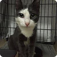 Adopt A Pet :: Joshua - New York, NY