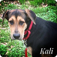 Adopt A Pet :: Kali - West Hartford, CT