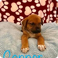 Adopt A Pet :: PP - Connor - Tucson, AZ