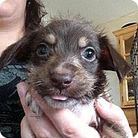 Adopt A Pet :: Legs - pasadena, CA