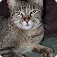 Adopt A Pet :: Mama Kitty - Justin, TX