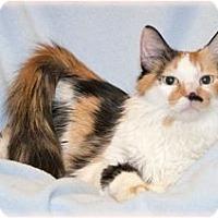 Adopt A Pet :: Lola - Warren, MI