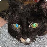 Adopt A Pet :: Candy - Port Republic, MD