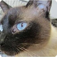 Adopt A Pet :: Symie - Bunnell, FL