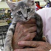 Adopt A Pet :: Rosebud - Vero Beach, FL