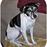 Adopt A Pet :: Rito - Jacksonville, FL
