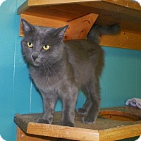 Adopt A Pet :: Jake - Dover, OH