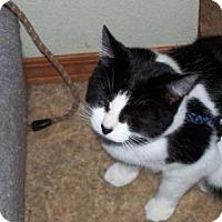 Adopt A Pet :: Leo - Kelso/Longview, WA