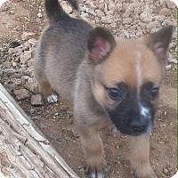 Adopt A Pet :: Pogo - Phoenix, AZ