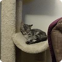 Adopt A Pet :: Shirley - Richmond, VA