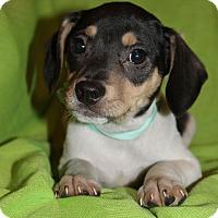 Adopt A Pet :: Alvin - Trenton, NJ