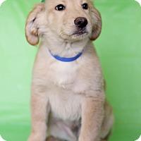 Adopt A Pet :: Frank - Waldorf, MD