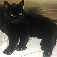 Adopt A Pet :: Jester - Herndon, VA
