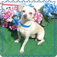 Adopt A Pet :: QUESO - Marietta, GA