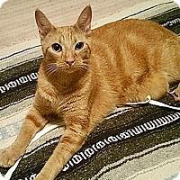 Adopt A Pet :: Vaughn - Tampa, FL