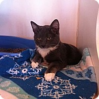 Adopt A Pet :: Graham - Secaucus, NJ
