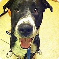 Adopt A Pet :: Rocko - Saskatoon, SK