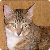 Adopt A Pet :: Ginger - Lombard, IL