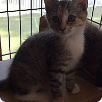 Adopt A Pet :: Havana - Acme, PA