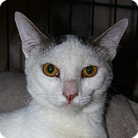 Adopt A Pet :: Salty - North Branford, CT