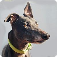 Adopt A Pet :: Jordi - Ware, MA