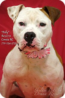 American Bulldog Mix Dog for adoption in Newnan City, Georgia - Polly
