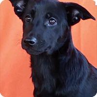 Adopt A Pet :: Magic - East Sparta, OH