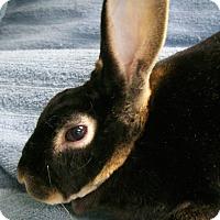 Adopt A Pet :: Cocoa - Harrisburg, PA