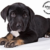 Adopt A Pet :: Max 3 - Lodi, CA