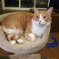 Adopt A Pet :: Mikey - Smyrna, GA