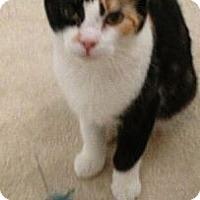 Adopt A Pet :: Marta - Reston, VA