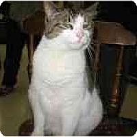Adopt A Pet :: Lolita - Milwaukee, WI