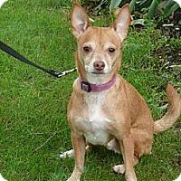 Adopt A Pet :: Beans - Stroudsburg, PA