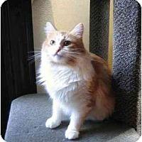 Adopt A Pet :: Pickle - Portland, OR