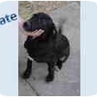 Adopt A Pet :: Kate - Arlington, TX