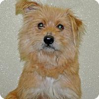 Adopt A Pet :: Benny - Port Washington, NY