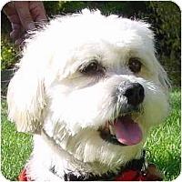 Adopt A Pet :: Wilson - La Costa, CA