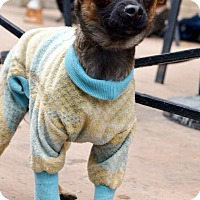 Adopt A Pet :: Mindy-Adoption pending - Bridgeton, MO