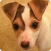 Adopt A Pet :: Becky#3F - Orlando, FL