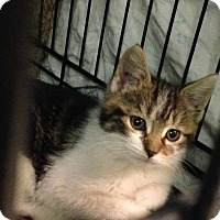 Adopt A Pet :: Antonio - East Brunswick, NJ