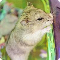 Adopt A Pet :: Leony - Benbrook, TX