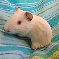 Adopt A Pet :: Casper & Tuff - South Bend, IN