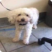 Adopt A Pet :: A427089 - San Antonio, TX