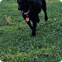 Adopt A Pet :: Annie - Franklin, IN