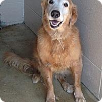 Adopt A Pet :: Jules - New Canaan, CT