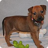 Adopt A Pet :: April - Scottsdale, AZ
