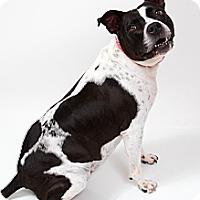 Adopt A Pet :: Elsie - New Orleans, LA