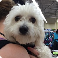Adopt A Pet :: CHARLIE - Birmingham, MI